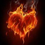 Pitta heart