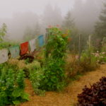 Autumn Rituals for Seasonal Change